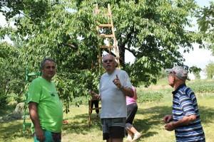 Szatmárnémeti természetjárók cseresznyeszedés Szatmárhegyen